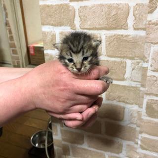 6匹の保護猫、キジトラの子猫ちゃん