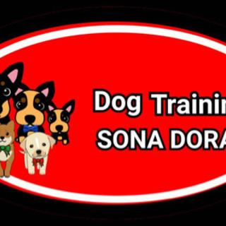 犬のしつけ オンラインドッグトレーニング 問題行動改善