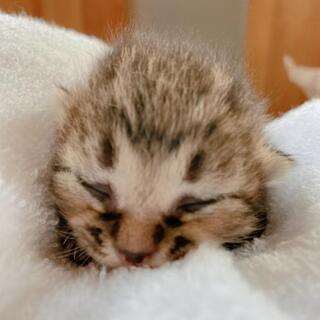 子猫  生まれたて