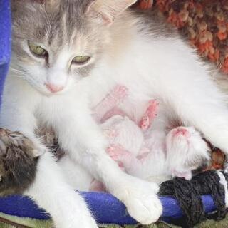 4月5日産まれ。白黒ちゃん。右端の子です。