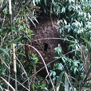 スズメバチの巣 - 多賀城市