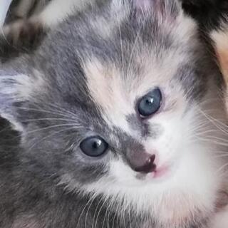 生後1ヶ月過ぎの子猫