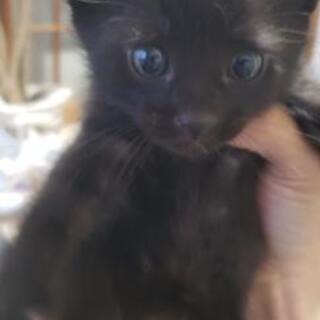 生後約2ヶ月、仔猫❗