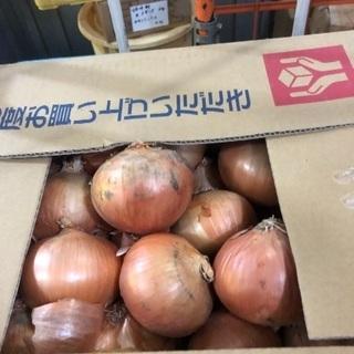 玉葱 LLサイズ 5kg