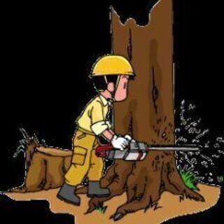 🌷どんな立竹木をお引き受けいたします。             ...