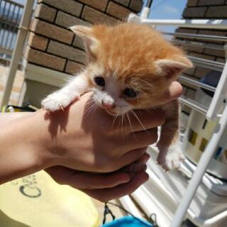 かわいい茶色の子猫