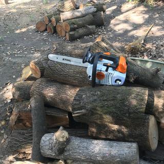 どんな木でも伐採します!庭・土地の樹木の伐採!特殊伐採から通常伐...