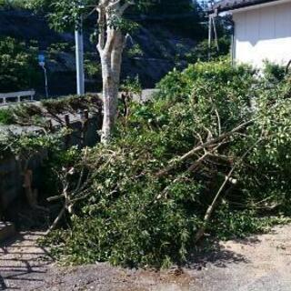 庭木の剪定~除草、廃棄、管理迄、全て