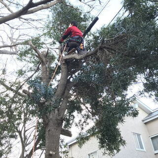 大きくなりすぎ危険となった植木の伐採 風台風に備え敷地内植木伐採...