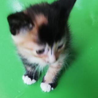1ヶ月くらいの子猫