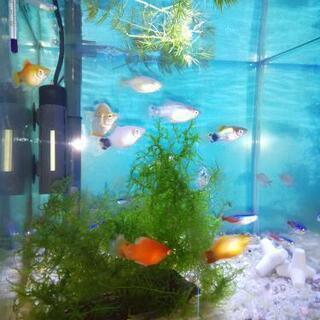 防災対策用 熱帯魚水槽