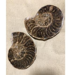 アンモナイト 化石 スライス一対
