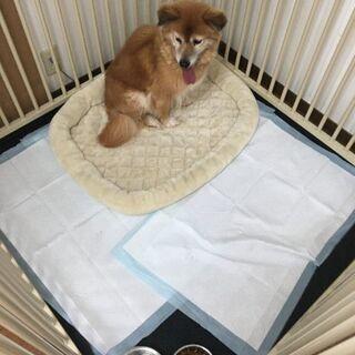 保護犬(猫)・預かりさんメンバー - メンバー募集