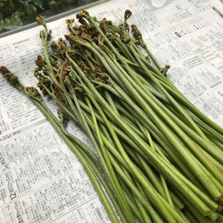 山菜ワラビ500g