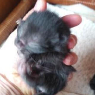 4月18日に、野良猫が子猫をうみました。