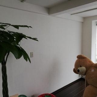 新オフィスの内装に練習台として壁画アートしませんか?