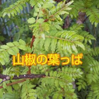 山椒の葉っぱ【よねベジ】