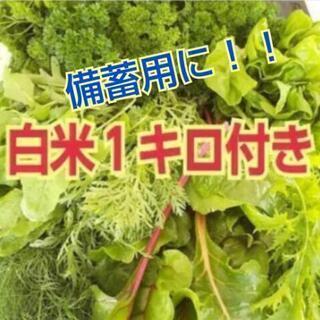 お野菜入れ替え時期の為、しばらくお休みします🙇🏻♀️薬お…