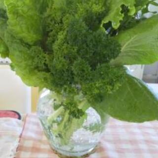 お野菜成長中の為しばらくお休みします【よねベジ】 - 甲府市
