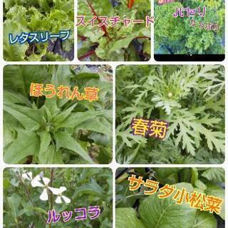 お野菜成長中の為しばらくお休みします【よねベジ】 − 山梨県