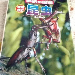 🐞 昆虫 学研の図鑑