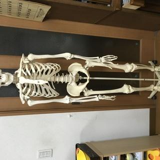 等身大人体模型  人体標本 3B Smart Anatomy