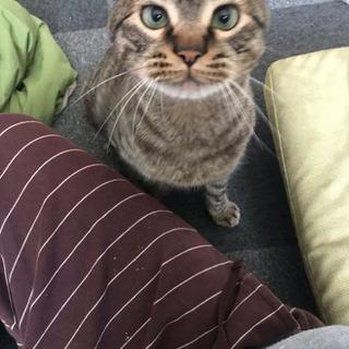 3歳生まれの猫です。可愛がってくれる方