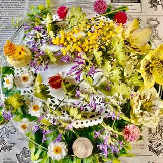 お庭のお花譲ってください!