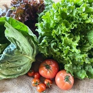 野菜の配送はじめます!の画像