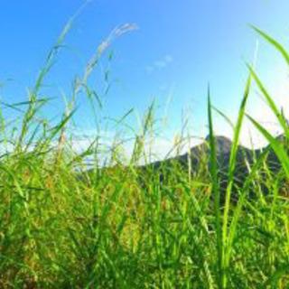 草むしり、庭掃除☆