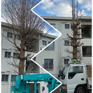 工場 老人ホーム アパートマンションの樹木剪定ならお任せ