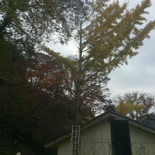 (3月空き有)剪定・伐採、草刈りいたします。