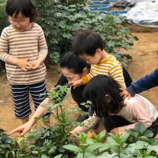 畑でお野菜収穫販売しています。