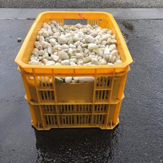 ガーデニング小石(白色)敷石やや丸い形 砂利