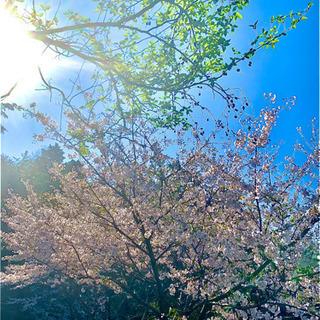 FOREST 学びの森〜個別指導、家庭教師