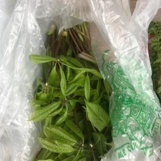コシアブラ、他山菜