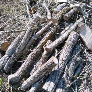 伐採したイチョウの枝と丸太 あげます。
