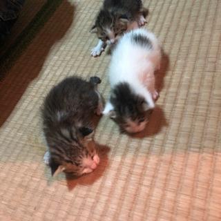 里親募集 子猫 0ヶ月 4匹
