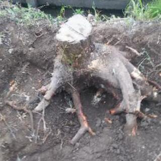 【埼玉県の便利屋】木の根を除去します
