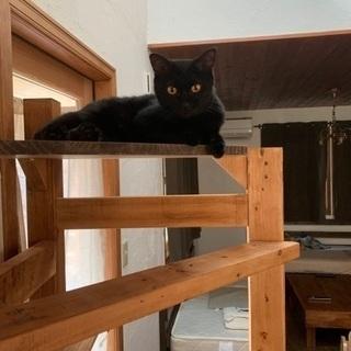 【里親募集】綺麗な黒猫の女の子です!
