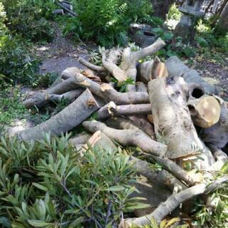 大木の画像