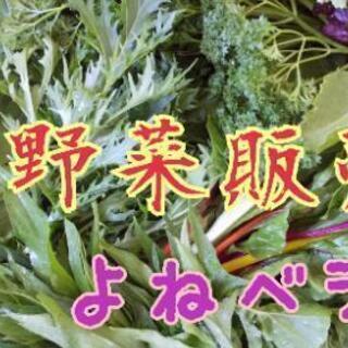 お野菜販売【よねベジ】