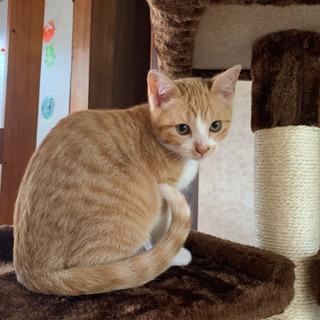 1月10日産まれの仔猫※決まりました!