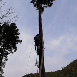 空師です、木の伐採お任せください!