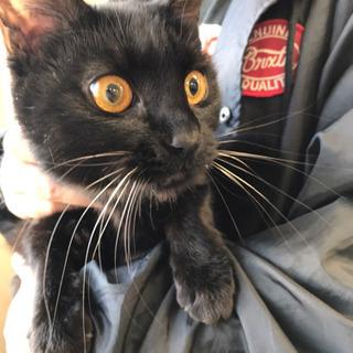 黒猫 1歳未満 メス 募集延期 追記