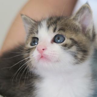 生後1か月のキジシロ君