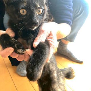 𓃠 𓃠 𓃠 3匹の子猫ちゃん(1匹だけでもOKです) - 猫