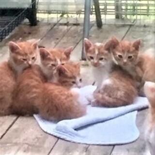 生後一か月の子猫の飼い主になってください。