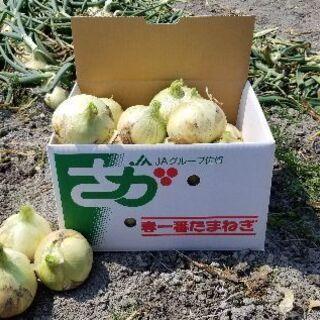 全国配送致します約10㎏1,300円佐賀県玉葱正品です