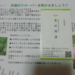 四つ葉のクローバーの種
